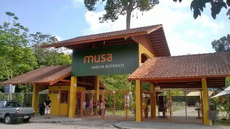 musa-5